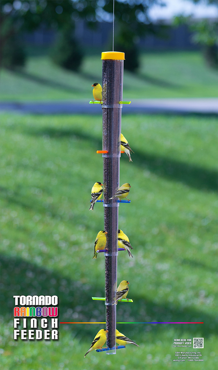 Yellow Finches are eating on a Tornado Rainbow Finch Feeder